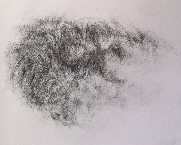 Hautes herbes –  fusain sur papier