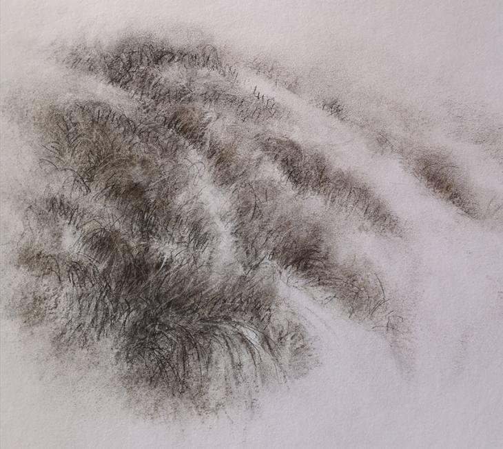 Chemins d'herbes – fusain sur papier
