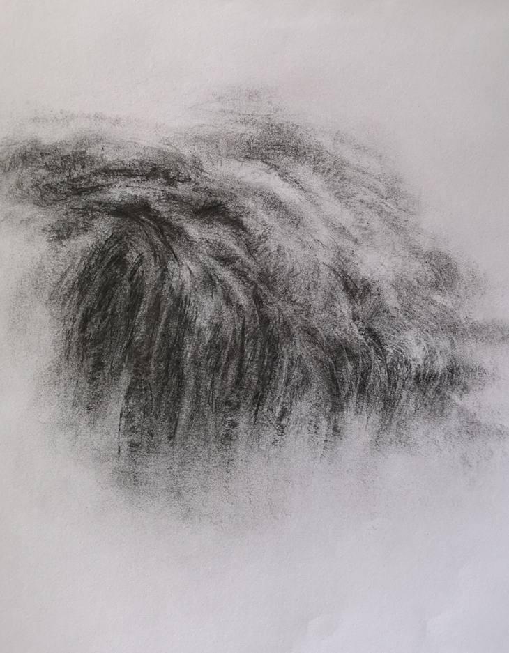 Herbes du bord de la dune – fusain sur papier