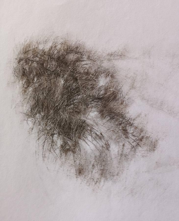 Herbes brunes – fusain sur papier